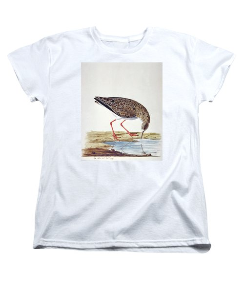 Curlew Sandpiper Women's T-Shirt (Standard Cut) by Charles Collins