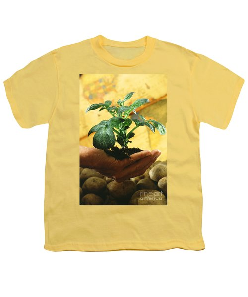 Potato Plant Youth T-Shirt by Science Source