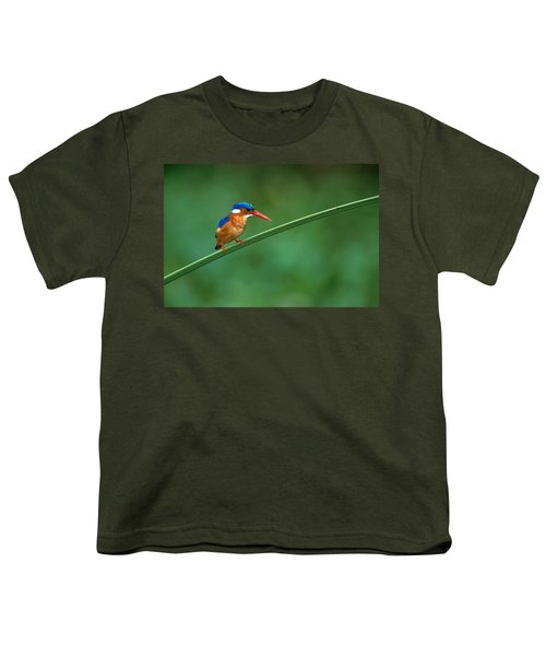 Malachite Kingfisher Tanzania Africa Youth T-Shirt by Panoramic Images