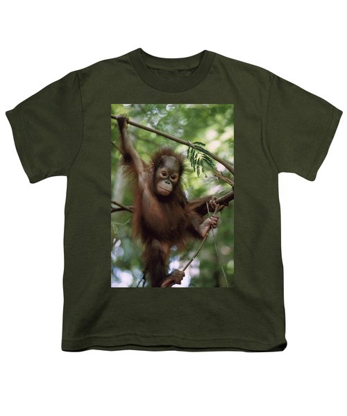 Orangutan Infant Hanging Borneo Youth T-Shirt by Konrad Wothe