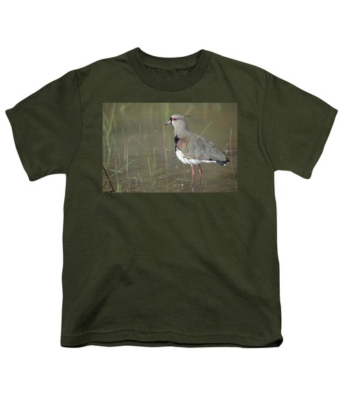 Southern Lapwing In Marshland Pantanal Youth T-Shirt by Tui De Roy