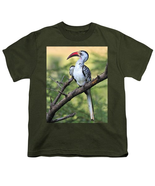 Red-billed Hornbill Youth T-Shirt by Tony Beck