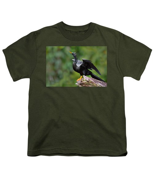 Anhinga Anhinga Anhinga Perching Youth T-Shirt by Panoramic Images