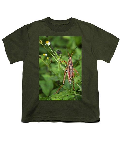 Eastern Lubber Grasshopper  Youth T-Shirt by Saija  Lehtonen