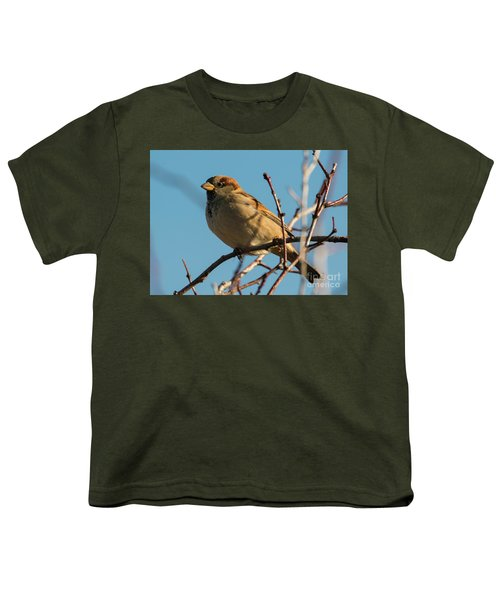 Female House Sparrow Youth T-Shirt by Mike Dawson