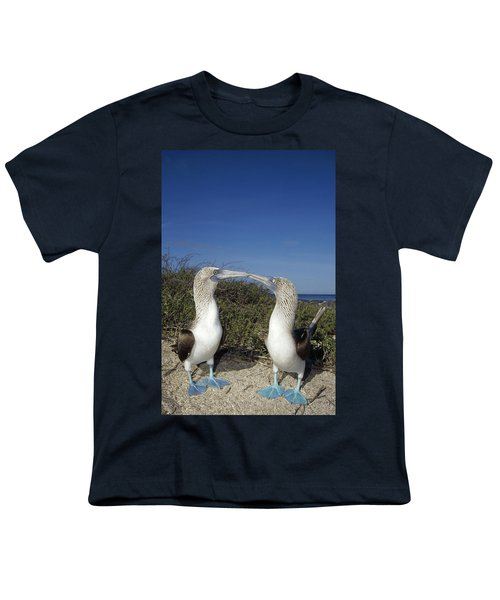 Blue-footed Boobies Courting Galapagos Youth T-Shirt by Tui De Roy