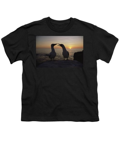Masked Booby Couple Courting Galapagos Youth T-Shirt by Konrad Wothe