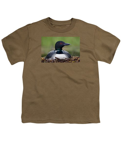 Common Loon On Nest British Columbia Youth T-Shirt by Connor Stefanison