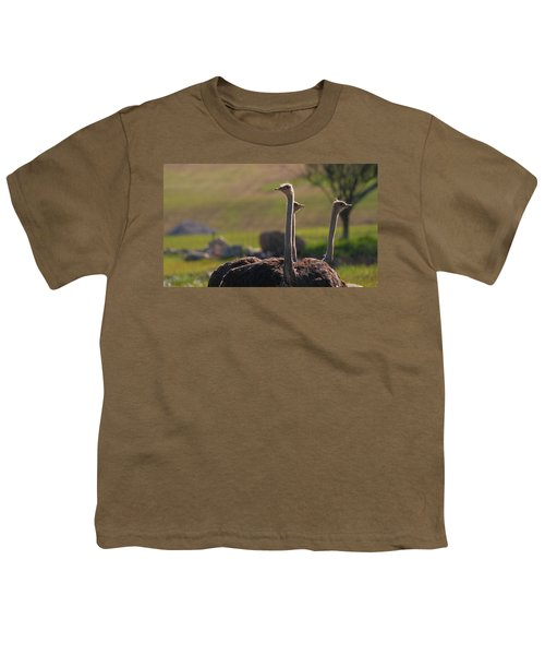 Ostriches Youth T-Shirt by Dan Sproul