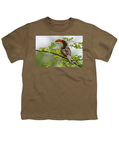 Yellow-billed Hornbill Youth T-Shirt by Bruce J Robinson