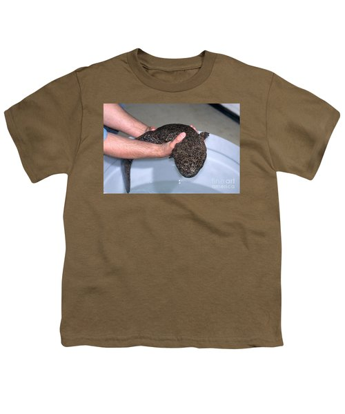 Chinese Giant Salamander Youth T-Shirt by Dante Fenolio