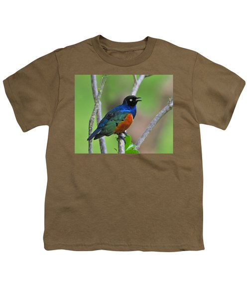 Superb Starling Youth T-Shirt by Tony Beck