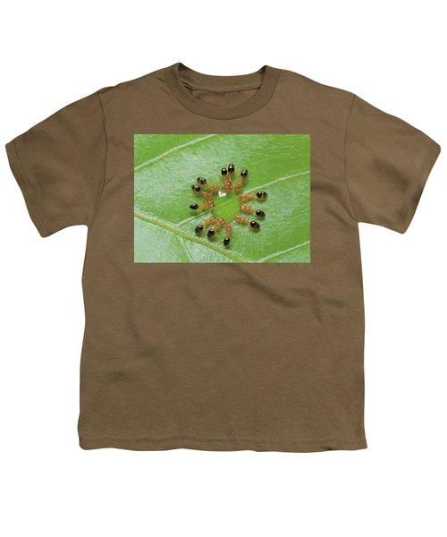 Ant Monomorium Intrudens Group Drinking Youth T-Shirt by Takashi Shinkai