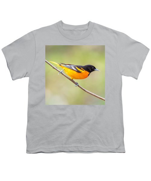 Baltimore Oriole Youth T-Shirt by Paul Freidlund