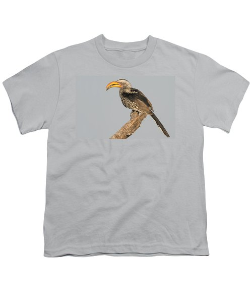 Southern Yellow-billed Hornbill Tockus Youth T-Shirt by Panoramic Images
