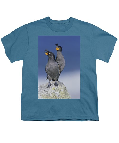 Crested Auklet Pair Youth T-Shirt by Toshiji Fukuda