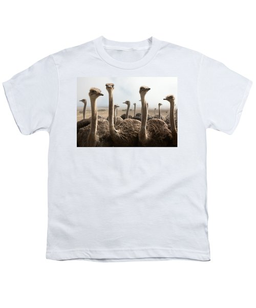 Ostrich Heads Youth T-Shirt by Johan Swanepoel