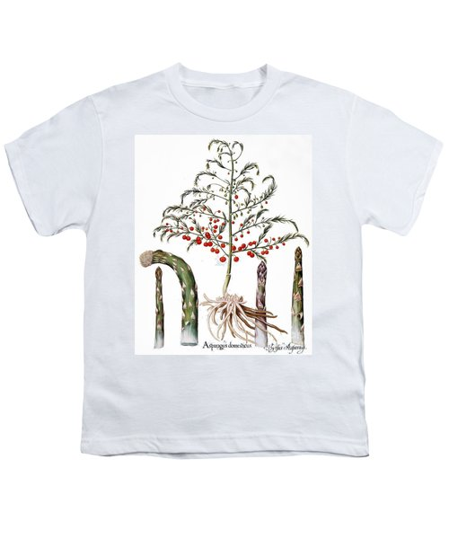 Botany: Asparagus, 1613 Youth T-Shirt by Granger