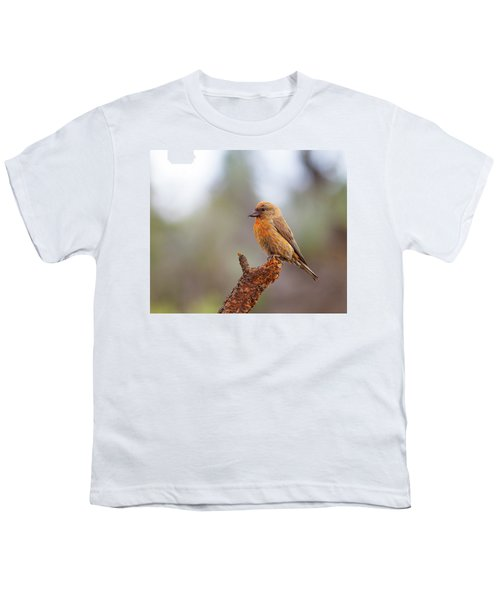 Male Red Crossbill Youth T-Shirt by Doug Lloyd