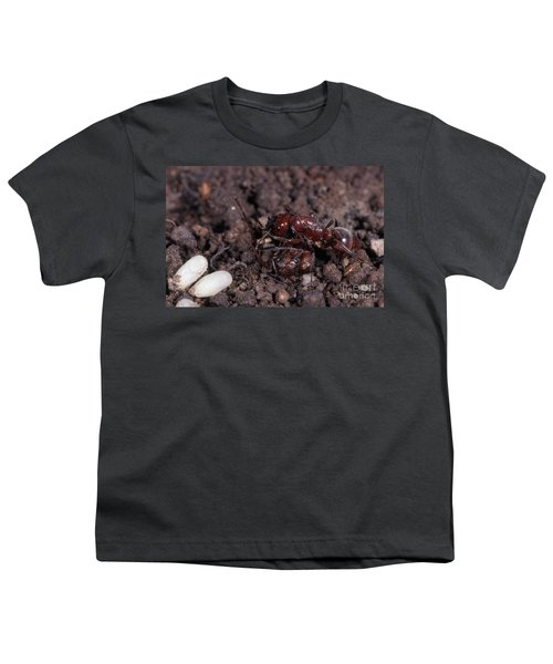 Ant Queen Fight Youth T-Shirt by Gregory G. Dimijian, M.D.