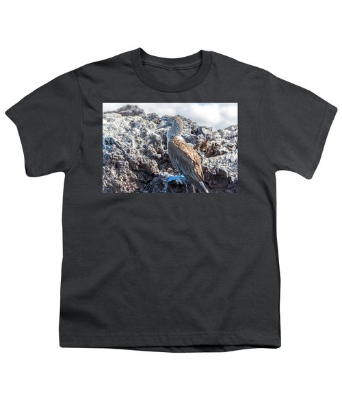 Blue Footed Booby Youth T-Shirt by Jess Kraft