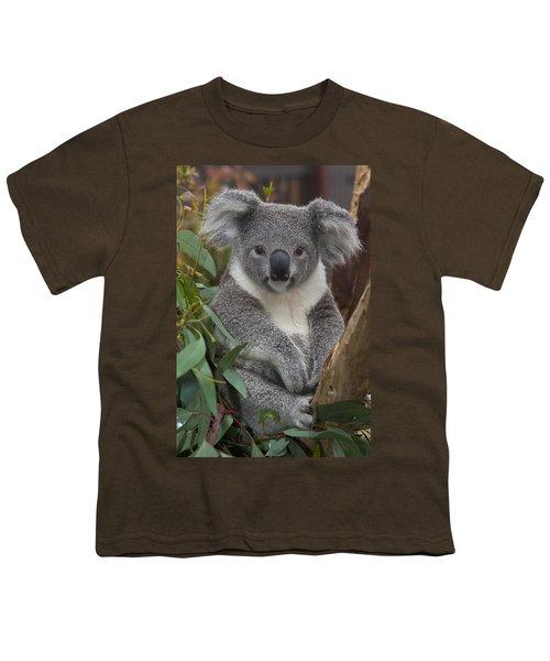 Koala Phascolarctos Cinereus Youth T-Shirt by Zssd
