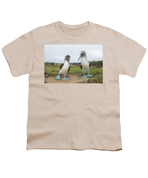Blue-footed Booby Pair Courting Youth T-Shirt by Tui De Roy