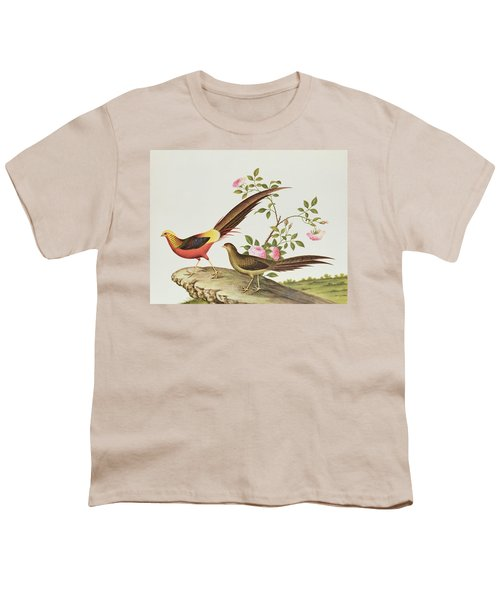 A Golden Pheasant Youth T-Shirt by Chinese School