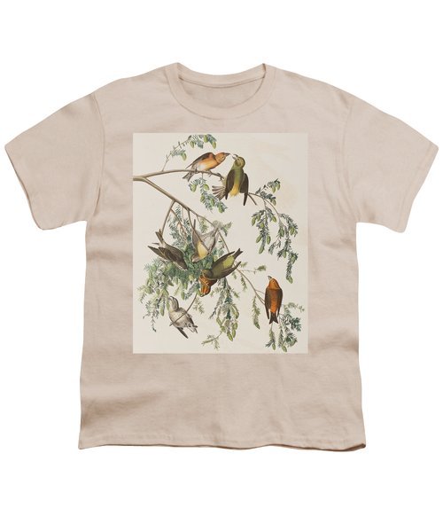 American Crossbill Youth T-Shirt by John James Audubon
