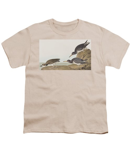 Purple Sandpiper Youth T-Shirt by John James Audubon