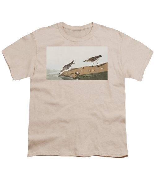 Semipalmated Sandpiper Youth T-Shirt by John James Audubon
