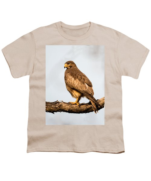 White-eyed Buzzard Butastur Teesa Youth T-Shirt by Panoramic Images