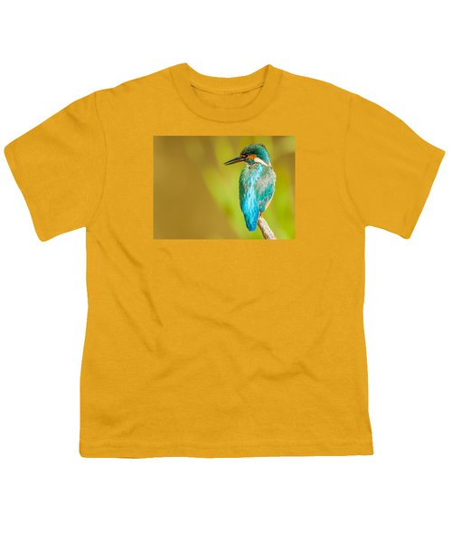 Kingfisher Youth T-Shirt by Paul Neville