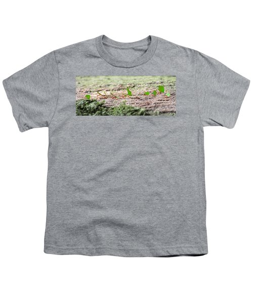 The Leaf Parade  Youth T-Shirt by Betsy Knapp