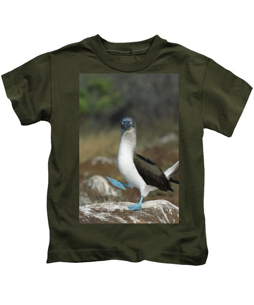 Blue-footed Booby Courtship Dance Kids T-Shirt by Tui De Roy