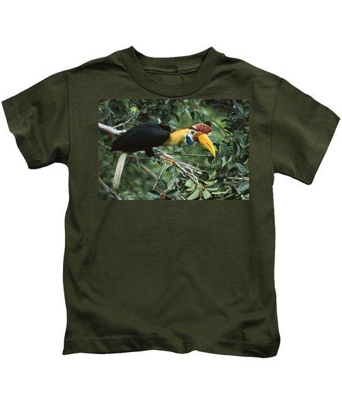 Sulawesi Red-knobbed Hornbill Male Kids T-Shirt by Mark Jones
