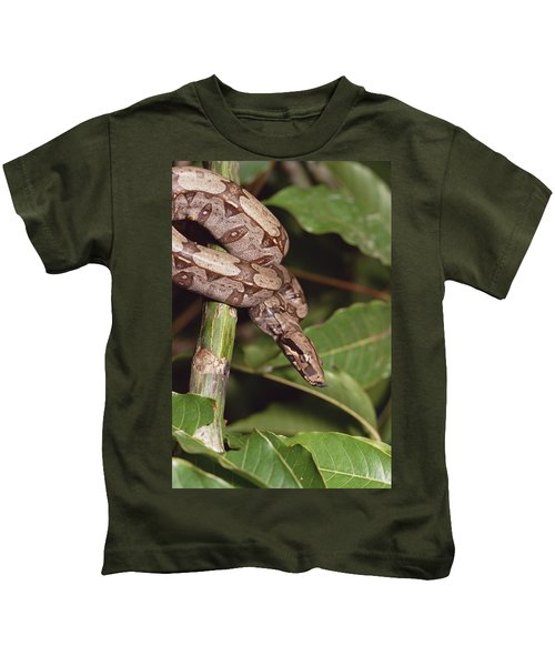 Boa Constrictor Coiled South America Kids T-Shirt by Gerry Ellis