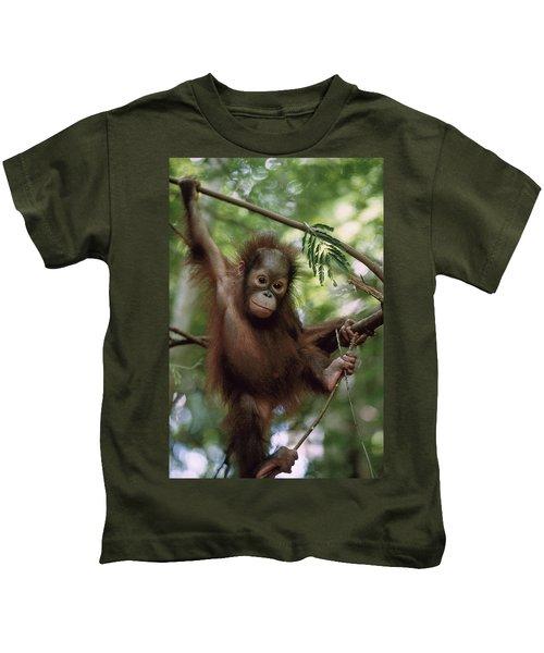Orangutan Infant Hanging Borneo Kids T-Shirt by Konrad Wothe