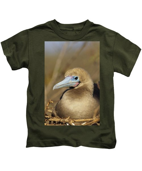Red-footed Booby Incubating Eggs Kids T-Shirt by Tui De Roy