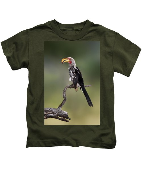 Southern Yellowbilled Hornbill Kids T-Shirt by Johan Swanepoel
