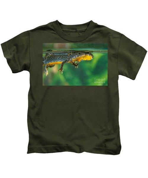 Alpine Newt Triturus Alpestris Kids T-Shirt by Gerard Lacz