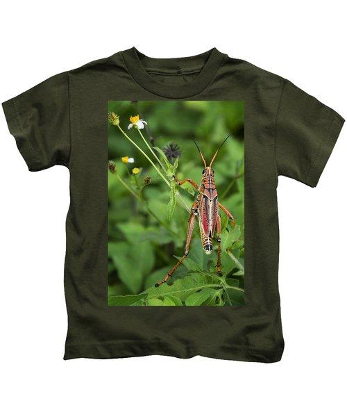 Eastern Lubber Grasshopper  Kids T-Shirt by Saija  Lehtonen