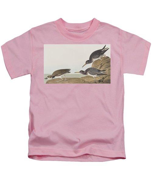 Purple Sandpiper Kids T-Shirt by John James Audubon