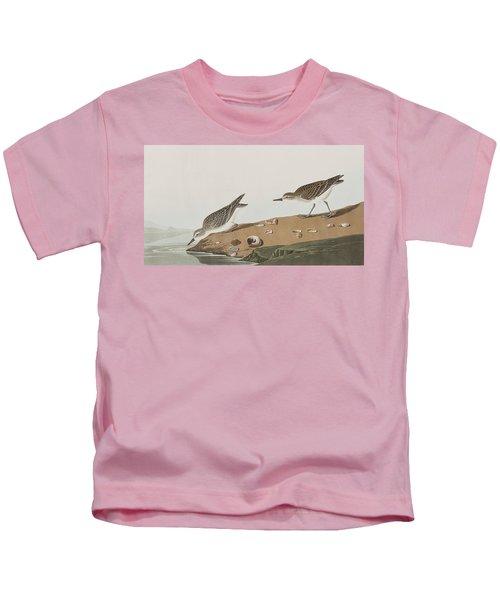 Semipalmated Sandpiper Kids T-Shirt by John James Audubon