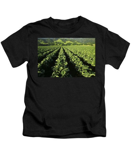 Agriculture - Mid Growth Cauliflower Kids T-Shirt by Ed Young