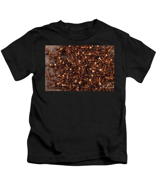 Army Ants Kids T-Shirt by Art Wolfe