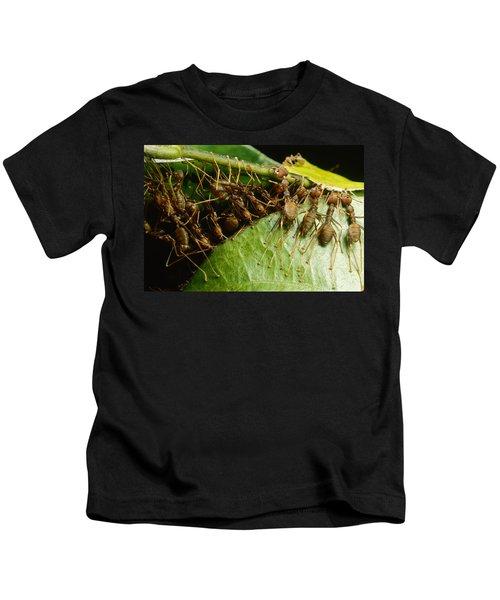 Weaver Ant Group Binding Leaves Kids T-Shirt by Mark Moffett