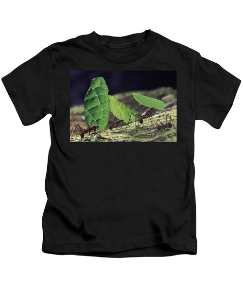 Leafcutter Ant Atta Cephalotes Workers Kids T-Shirt by Mark Moffett