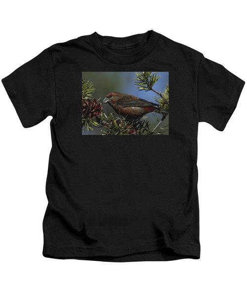 Red Crossbill Feeds On Pine Cone Seeds Kids T-Shirt by Mark Wallner