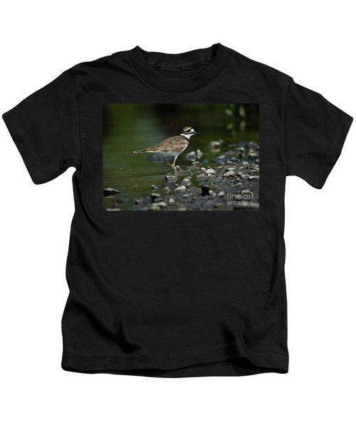 Killdeer  Kids T-Shirt by Douglas Stucky